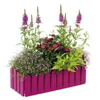pflanzen kaufen in gro er auswahl bei obi. Black Bedroom Furniture Sets. Home Design Ideas