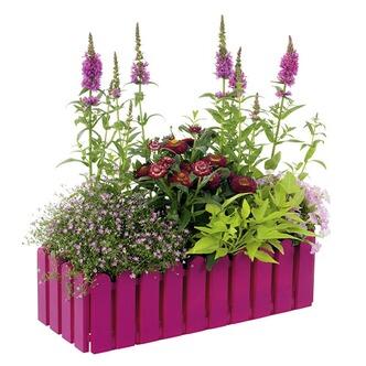 pflanzen in gro er auswahl bei obi online entdecken. Black Bedroom Furniture Sets. Home Design Ideas
