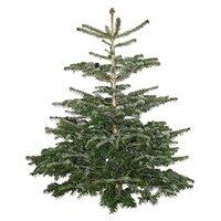 Weihnachtsartikel kaufen in gro er auswahl bei obi - Weihnachtsbaum obi ...