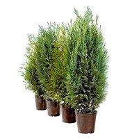 Pflanzen Kaufen In Großer Auswahl Bei Obi
