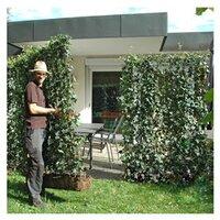 heckenpflanzen online kaufen bei obi. Black Bedroom Furniture Sets. Home Design Ideas