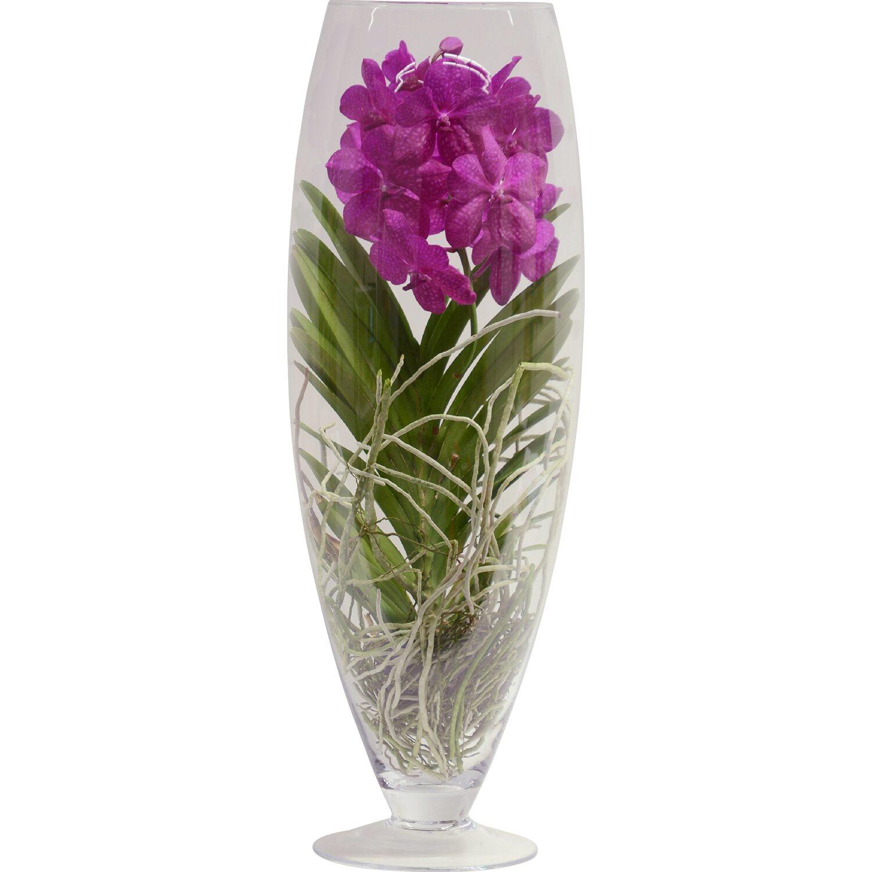 vanda orchidee gro bl tig mix 1 trieber im glas gef. Black Bedroom Furniture Sets. Home Design Ideas