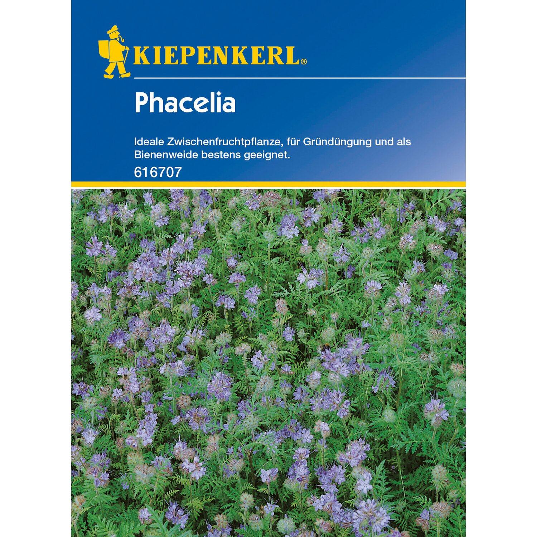 Kiepenkerl Phacelia Phacelia 50 g