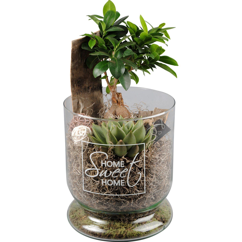 bepflanzter glas topf bonsaib umchen verschiedene farben. Black Bedroom Furniture Sets. Home Design Ideas