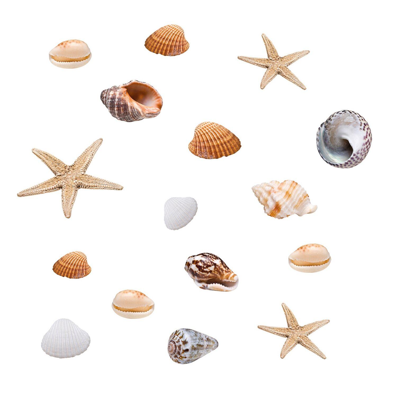 Eurographics  Fenstersticker Seashells