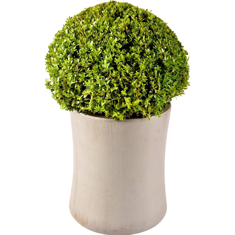 buchsbaum im polystone gef ca 24 cm buxus kaufen bei obi. Black Bedroom Furniture Sets. Home Design Ideas
