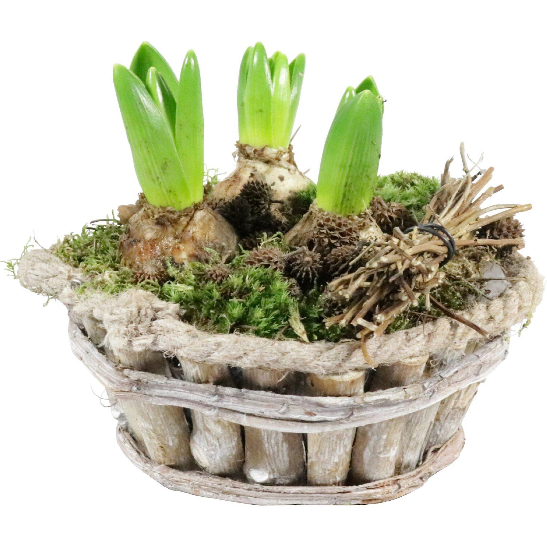 Balkonpflanzen Terrassenpflanzen Online Kaufen Bei Obi