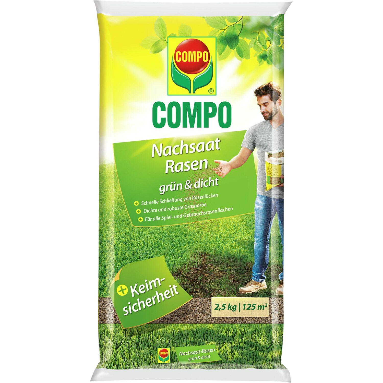 Rauke für ca 0,5-1m² Samen Saatgut Salat Kräuter Aussaat Sämerei