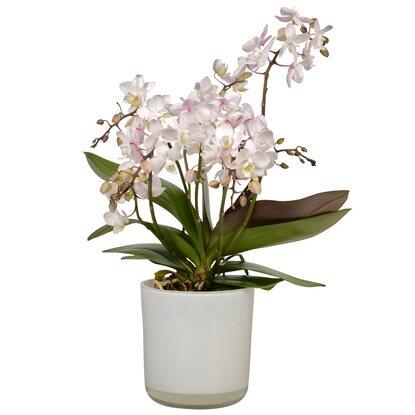 schmetterlings orchidee wild orchid wei im glas gef kaufen bei obi. Black Bedroom Furniture Sets. Home Design Ideas
