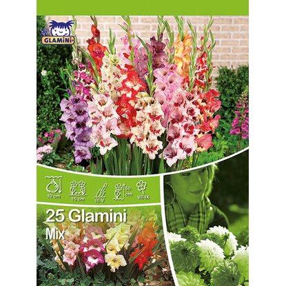 gladiolen glamini mischung mischung kaufen bei obi. Black Bedroom Furniture Sets. Home Design Ideas