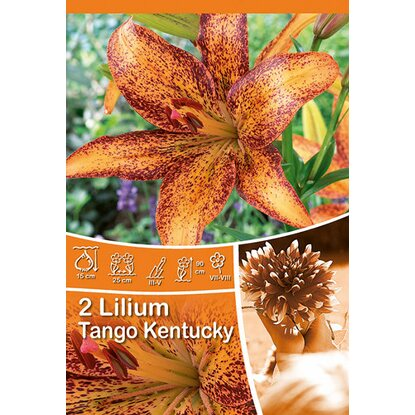 "Lilien ""Tango Kentucky"" Orange mit Braun"