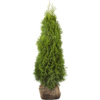 lebensbaum smaragd h he ca 80 100 cm ballenware thuja kaufen bei obi. Black Bedroom Furniture Sets. Home Design Ideas