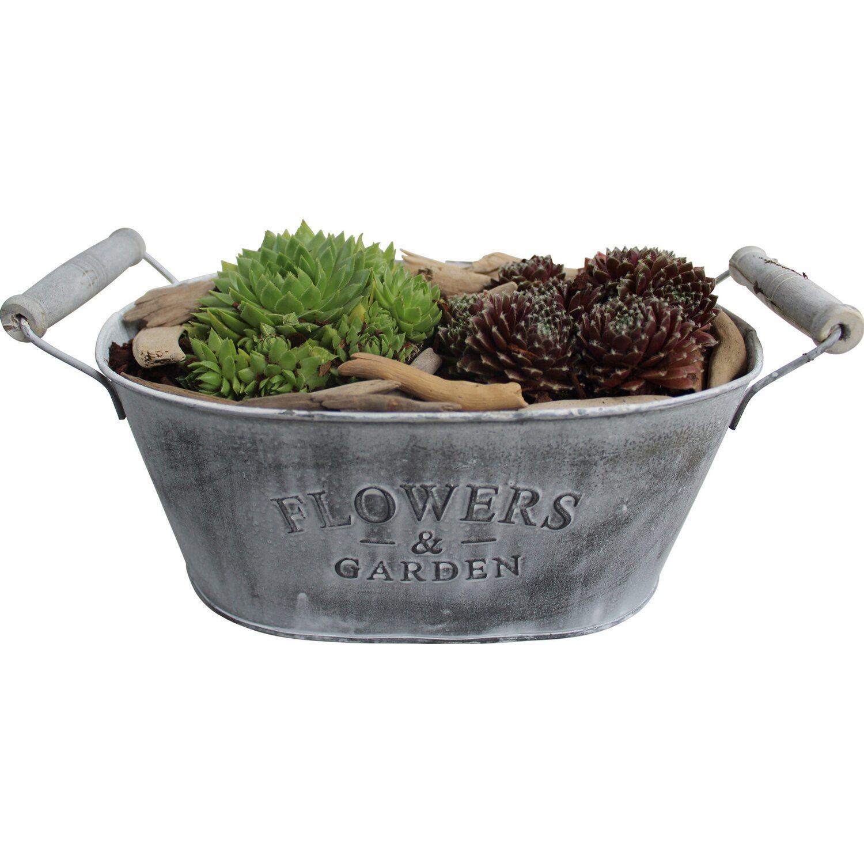 bepflanzte schale herbst sempervivum 2 pflanzen rot gr n ca 19 cm x 11 cm kaufen bei obi. Black Bedroom Furniture Sets. Home Design Ideas
