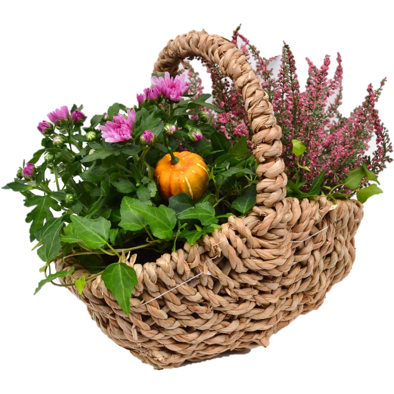 bepflanzte schale herbst kartoffelkorb 3 pflanzen ca 28 cm x 28 cm kaufen bei obi. Black Bedroom Furniture Sets. Home Design Ideas
