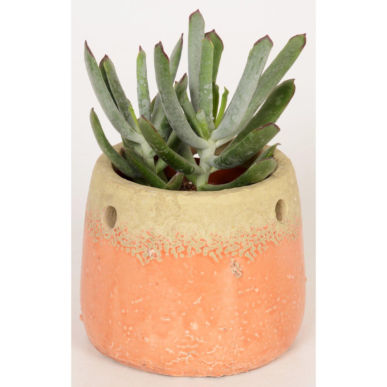sukkulenten-mix im beton-gefäß topf-Ø ca. 10 cm kaufen bei obi