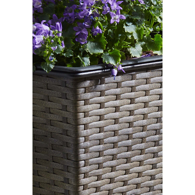 gartenfreude balkonkasten 50 cm x 19 cm cappuccino mit bew sserungssystem kaufen bei obi. Black Bedroom Furniture Sets. Home Design Ideas