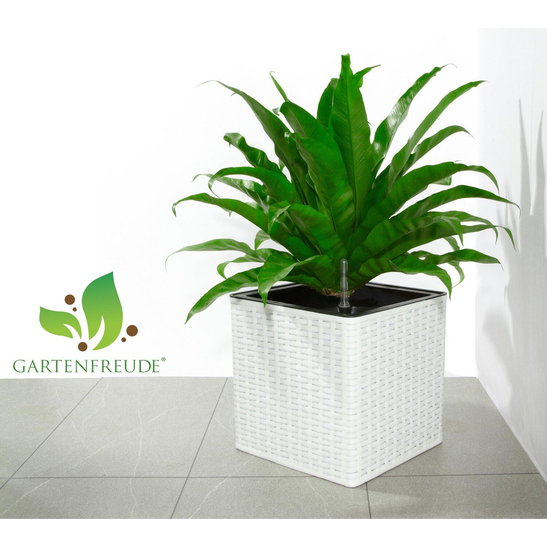 gartenfreude pflanzk bel polyrattan 31 cm x 31 cm wei. Black Bedroom Furniture Sets. Home Design Ideas