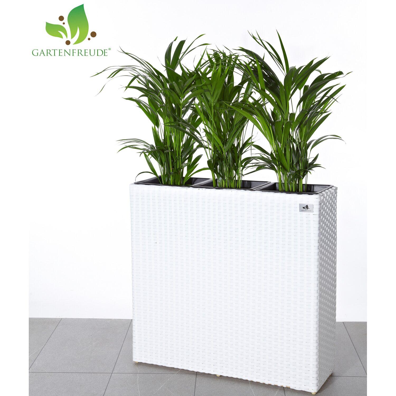 gartenfreude raumteiler pflanzkübel polyrattan 76 cm x 26 cm weiß