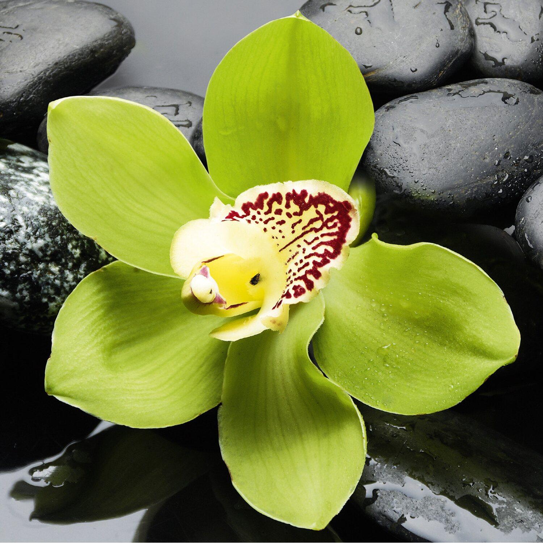 eurographics deco glass green orchid 20 cm x 20 cm kaufen. Black Bedroom Furniture Sets. Home Design Ideas