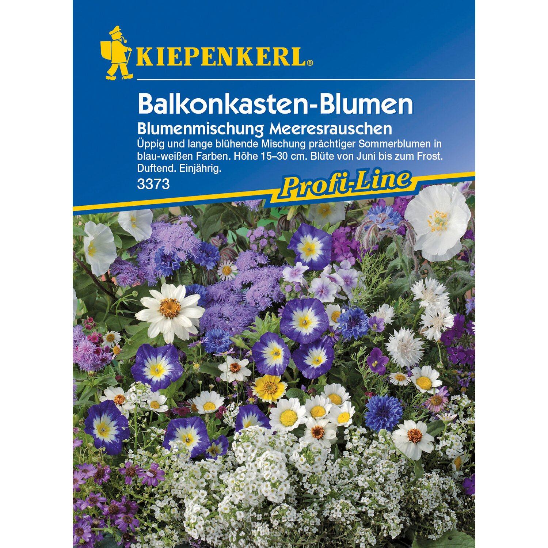 Kiepenkerl Balkonkasten Blumen Blumenmischung Meeresrauschen Weiss