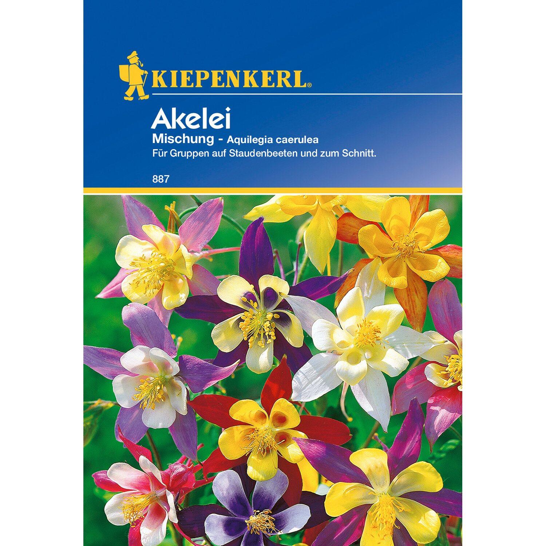 Akelei Mischung mehrjährig  Blumen Samen Stauden Schnittblume Aquilegia caeru