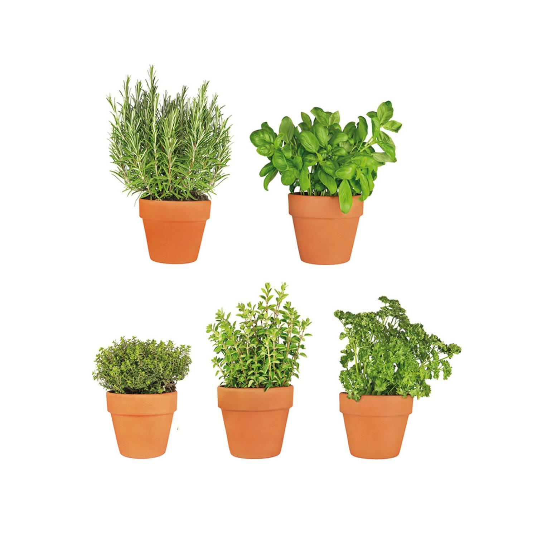 Eurographics  Fenstersticker antistatisch All My Herbs