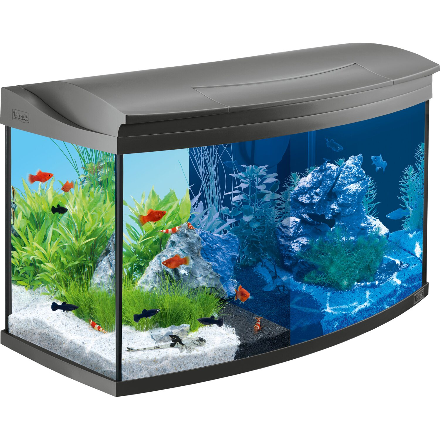 tetra aquarium set aquaart ii evolution line led 100 l anthrazit kaufen bei obi. Black Bedroom Furniture Sets. Home Design Ideas