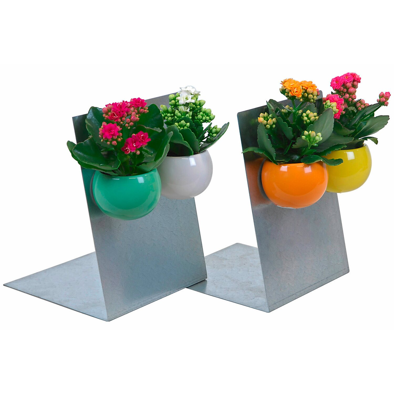 flammendes k thchen topf ca 6 cm im magnettopf kalanchoe blossfeldiana kaufen bei obi. Black Bedroom Furniture Sets. Home Design Ideas