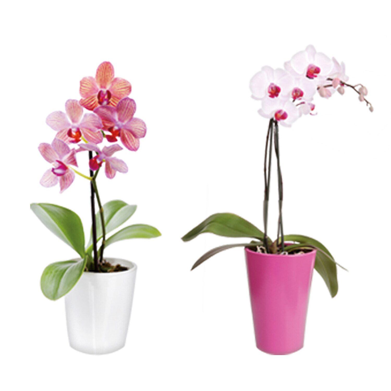 Eurographics  Fenstersticker antistatisch Orchid Window