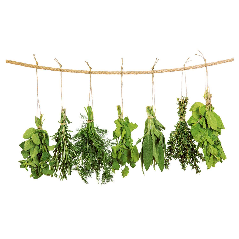Eurographics  Fenstersticker antistatisch Hanging Herbs