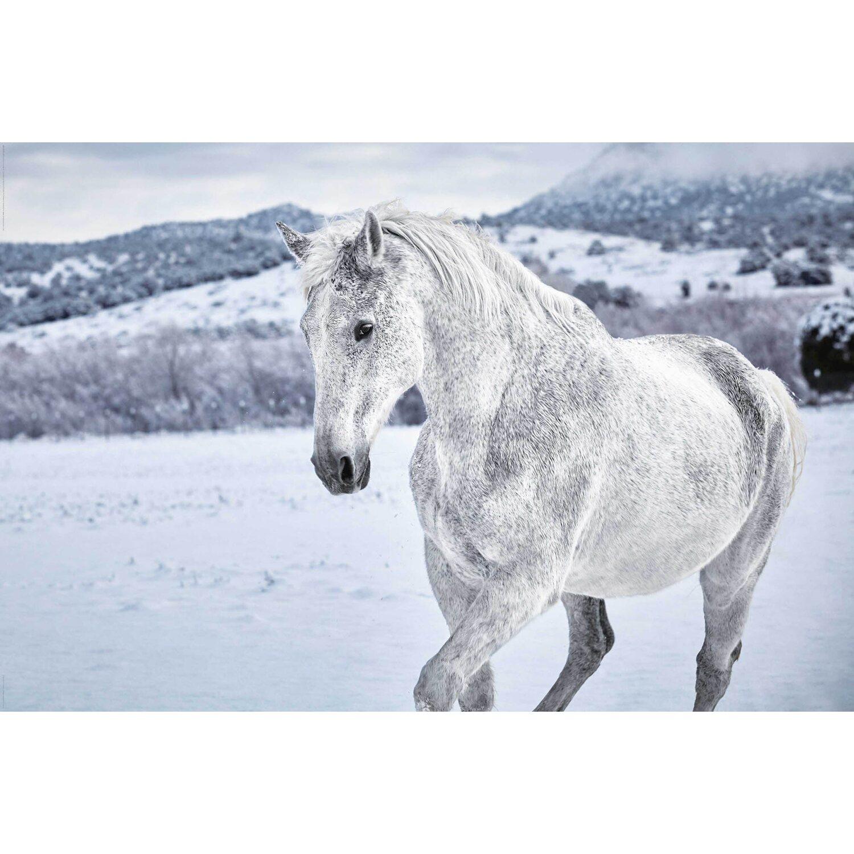 Wandbild Pferd im Schnee 90 cm x 60 cm