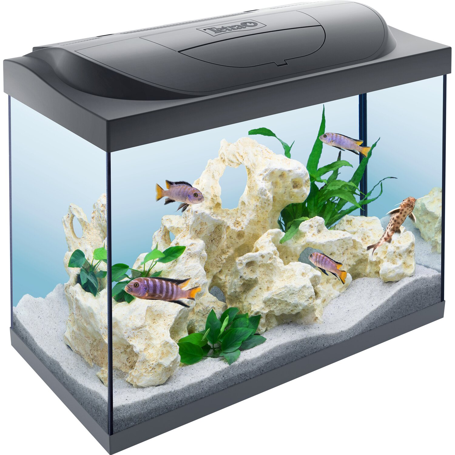 tetra starter line aquarium led 80 l kaufen bei obi. Black Bedroom Furniture Sets. Home Design Ideas