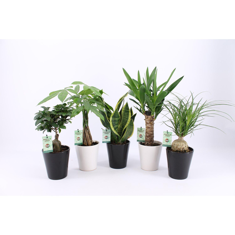 gr npflanzen mix easy to care topf ca 13 cm kaufen bei obi. Black Bedroom Furniture Sets. Home Design Ideas