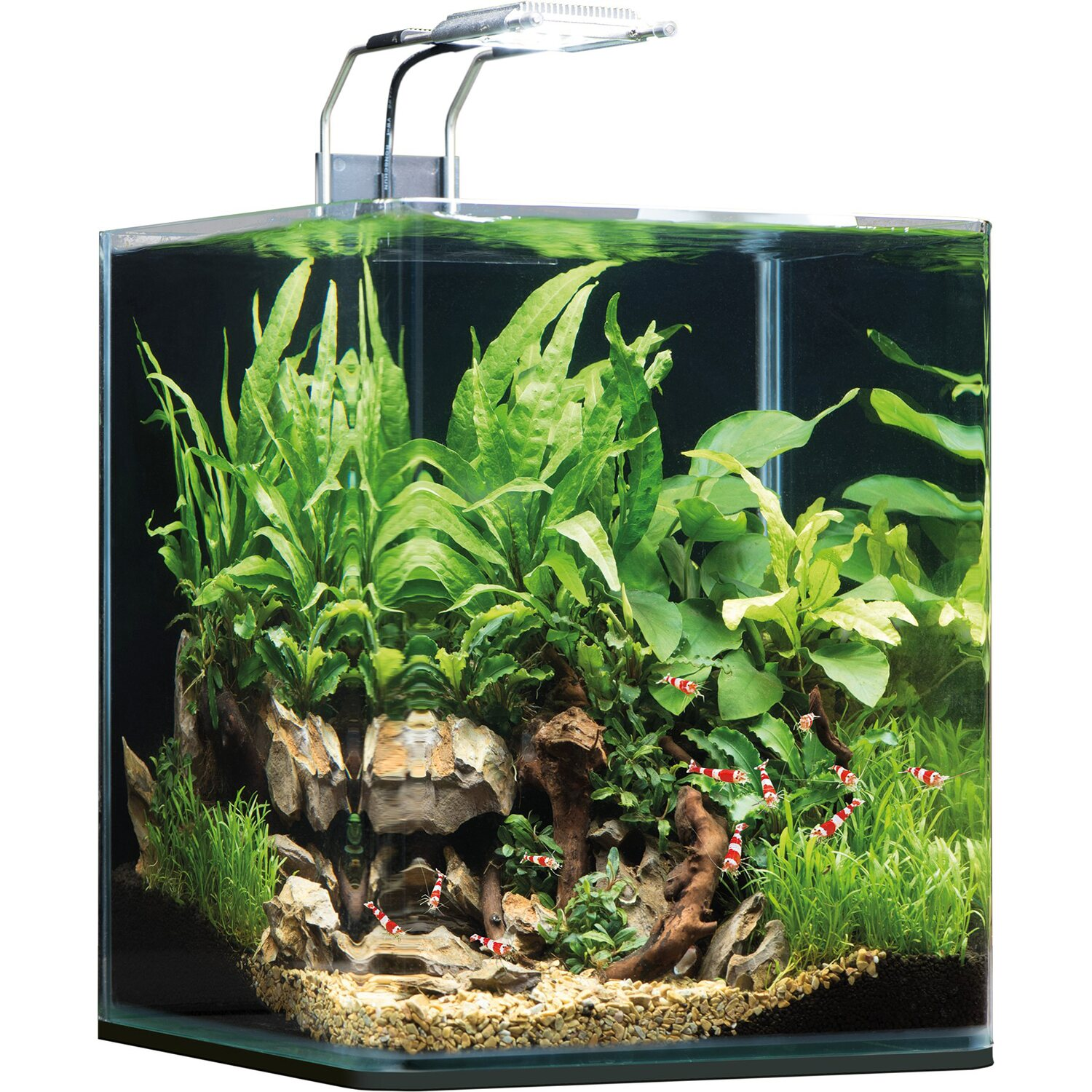dennerle mini aquarium nano cube complete soil 20 l kaufen bei obi. Black Bedroom Furniture Sets. Home Design Ideas