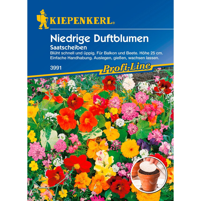 Sommerblumen online kaufen bei OBI