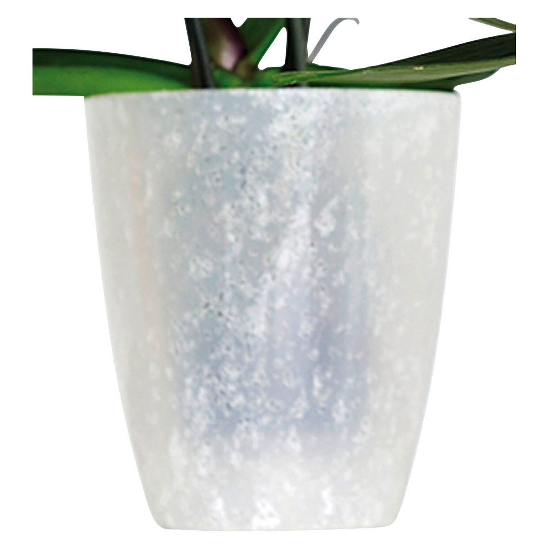 Ebertsankey Orchideen Ubertopf Madeira O 13 Cm Sand Kaufen Bei Obi