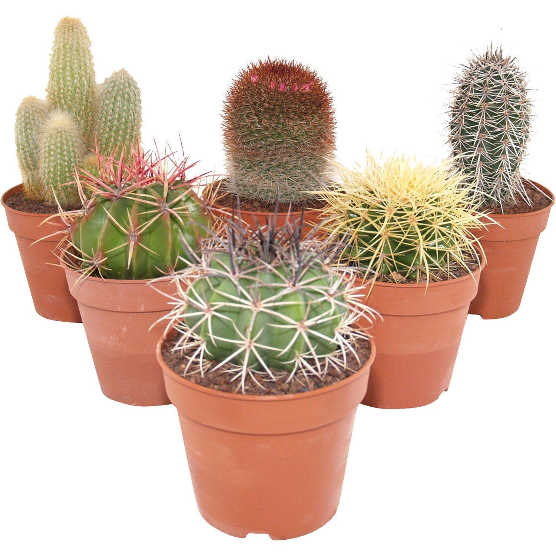 Exotische Pflanzen Online Kaufen Bei Obi