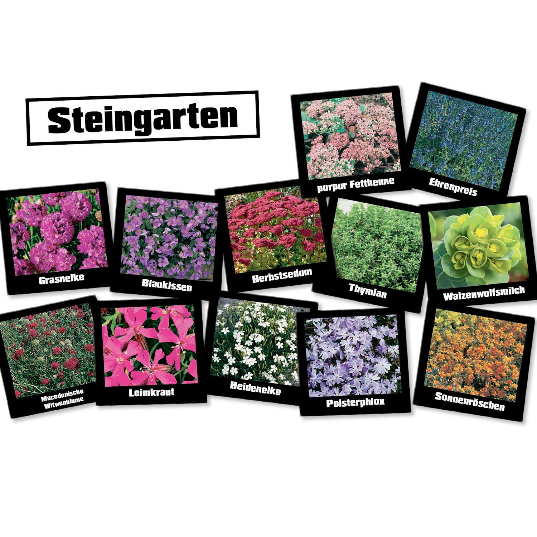 OBI´s Steingarten Stauden 24 Pflanzen