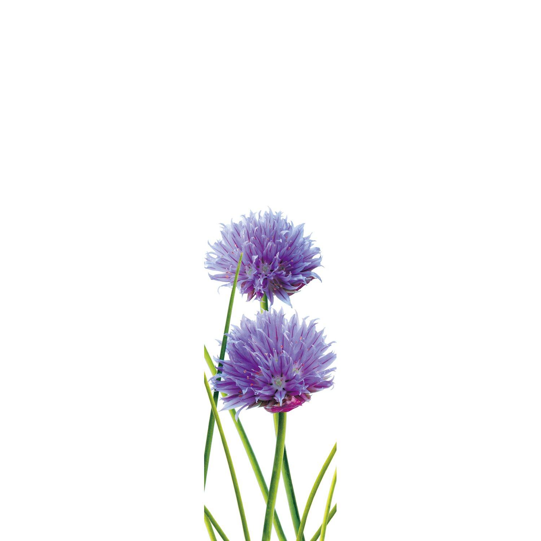 Bennetti  Schiebevorhang Voile Lila 60 cm x 245 cm