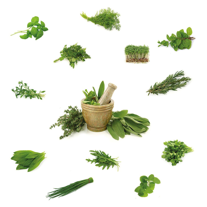 Eurographics  Fenstersticker Different Herbs