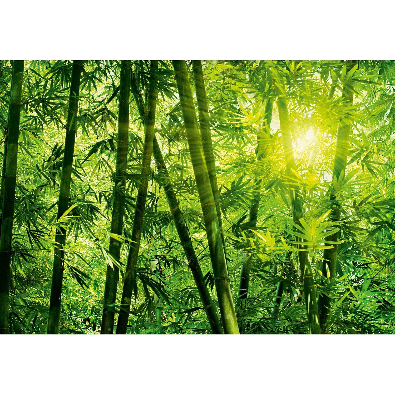 Fototapete Bambus Wald 366 cm x 254 cm