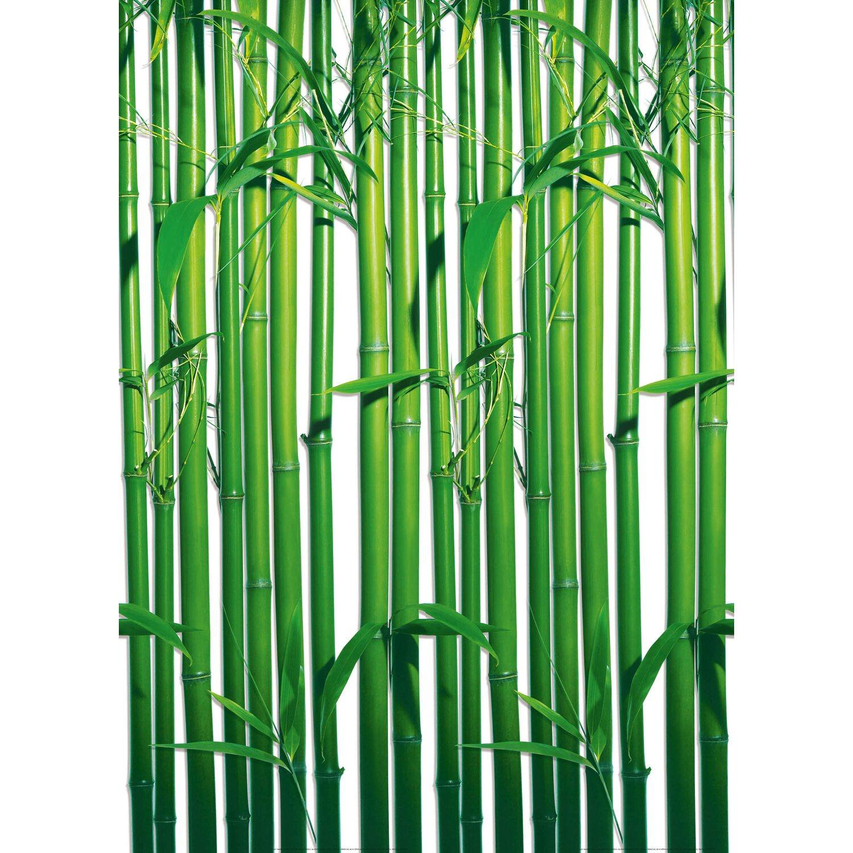 Fototapete Bambus 183 cm x 254 cm