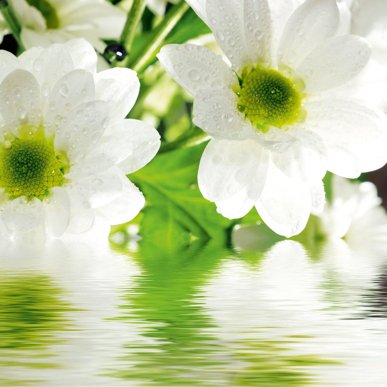 eurographics deco glass white daisy 30 cm x 30 cm kaufen bei obi. Black Bedroom Furniture Sets. Home Design Ideas