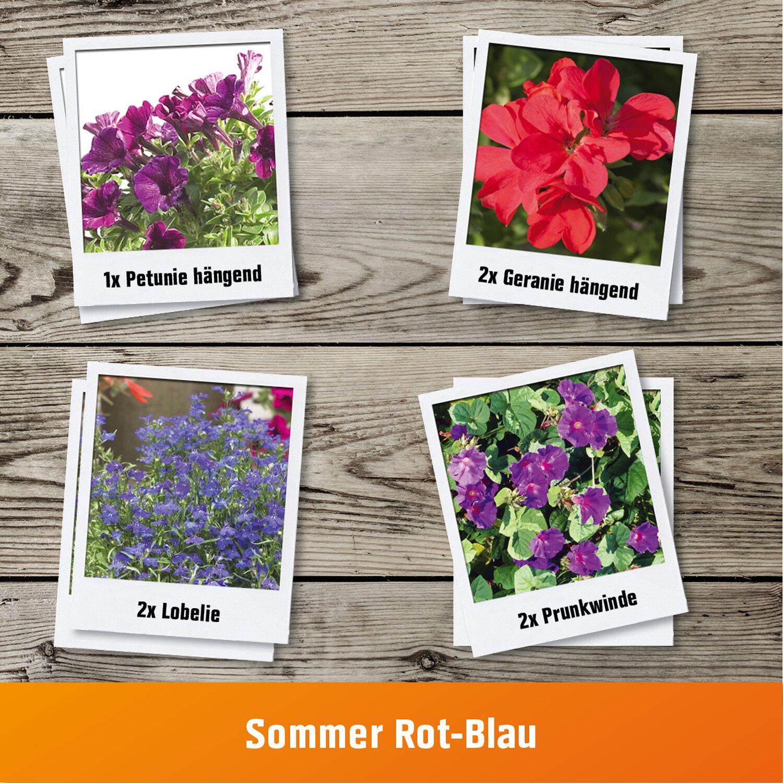 Pflanzen Set Sommer Rot Blau Fur Balkonkasten Kaufen Bei Obi