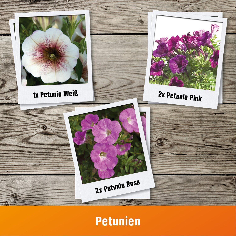 Pflanzen Set Petunien Fur Balkonkasten Kaufen Bei Obi
