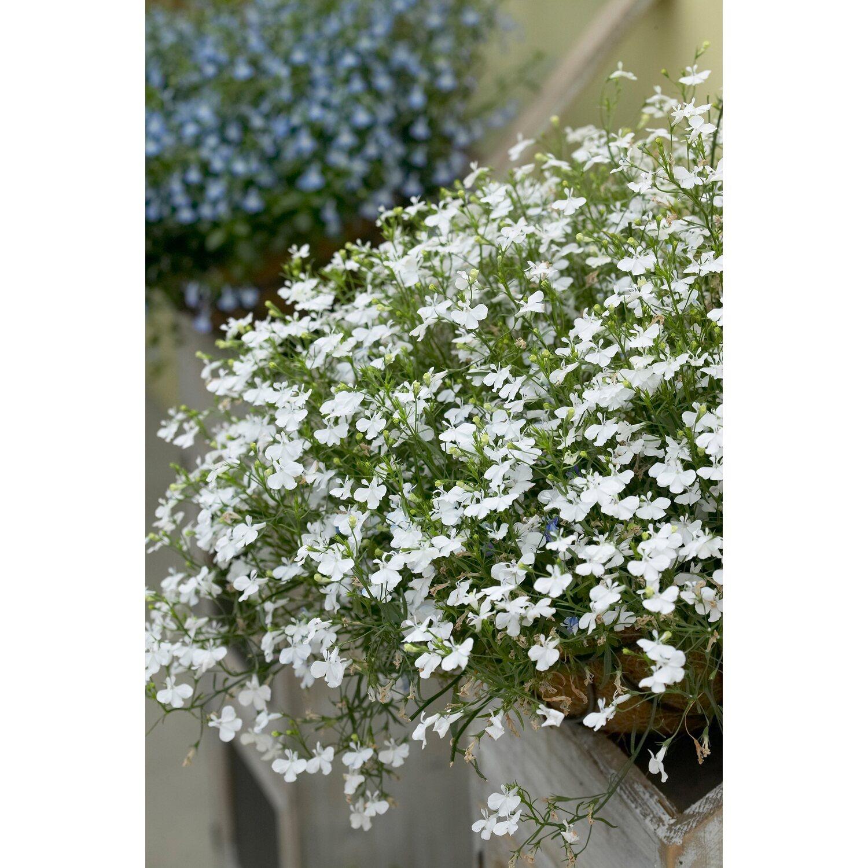 Wunderschön Balkonkästen Bepflanzen Beispiele Referenz Von Vollbild