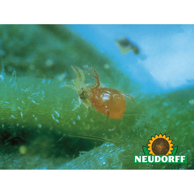 Neudorff Nützlinge PP-Raubmilben 100 Stück