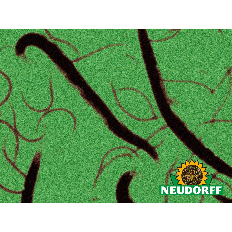 neudorff n tzlinge sc nematoden 10 mio kaufen bei obi. Black Bedroom Furniture Sets. Home Design Ideas