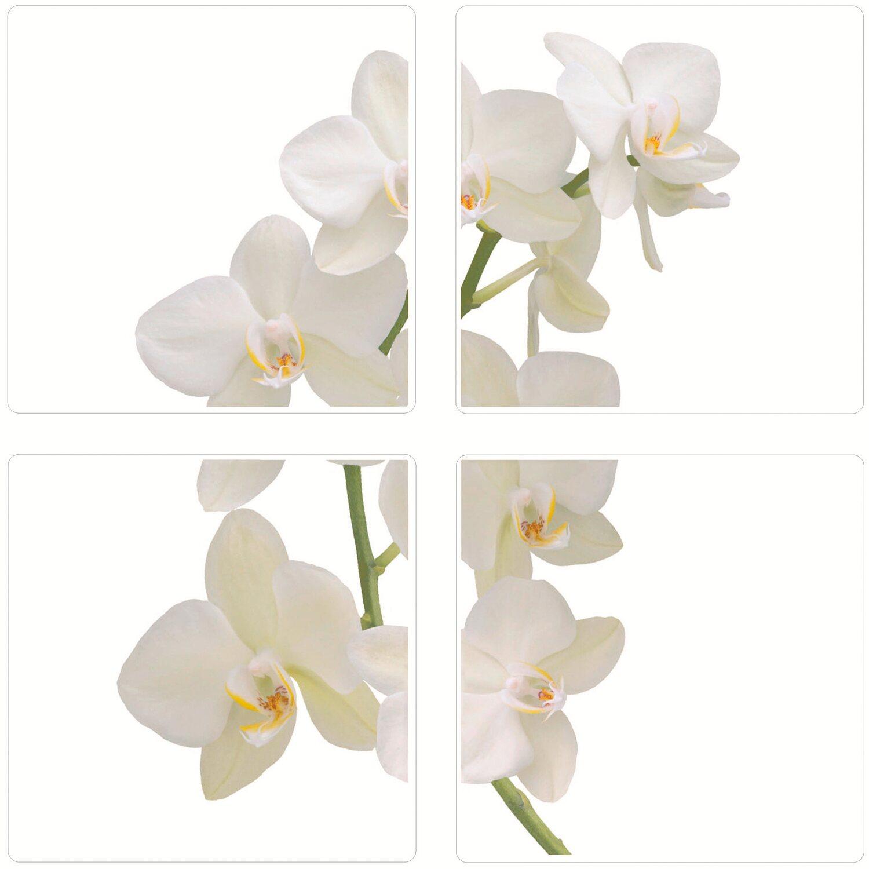 fliesen sticker orchidee kaufen bei obi. Black Bedroom Furniture Sets. Home Design Ideas