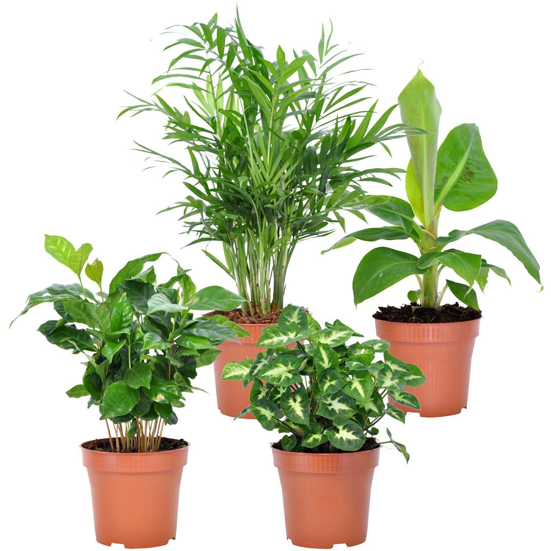 Grünpflanzen-Mix \